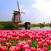 hollandia-gdata.jpg