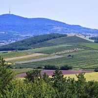 #vineyards Photo by Bihari Zoltán #tokajwineregion #tokaji #tokaj #bodrogkeresztur #visittokaj #tokajhegyalja #summertime #summmer #sunshine #nature #naturelover #naturephotography #naturepics #vineyard #instahungary #instahun #loves_hungary #visithungary @eurotravellers #UNESCO #unescoworldheritage #unescoworldheritagesite #instaphoto #pictureoftheday #picoftheday #mindekozben @elmenyitthon @discoverglobe @szeretlekmagyarorszag.hu @winerylovers @gotohungary_official @ilovehungarianwines @hellomagyarorszag @hello_hungary