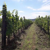#august  in Palandor Photo by Karádi-Berger #Winery  #tokajwineregion #tokaji #tokaj #tokajiaszu #visittokaj #tokajhegyalja #tokajiborok #wines #vineyard #whitewines #winelover #instawine #nature #naturephotography #naturelover #instahungary #instahun #turatajolo #loves_hungary #visithungary @eurotravellers #UNESCO #unescoworldheritage #unescoworldheritagesite #discoverglobe #instaphoto #pictureoftheday #picoftheday @zsoltberger  @elmenyitthon @ilovehungarianwines