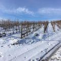 #tokajwineregion #tokaji #tokaj #visittokaj #tokajhegyalja #winter #vineyard #nature #naturelover #naturepics #instahungary #instahun #loves_hungary #visithungary #UNESCO #unescoworldheritage #unescoworldheritagesite #discoverglobe #instaphoto #pictureoftheday #picoftheday #mindekozben