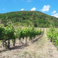 #summer in #Narancsi Photo by Karádi-Berger #Winery  #tokajwineregion #tokaji #tokaj #tokajiaszu #visittokaj #tokajhegyalja #tokajiborok #wines #vineyard #whitewines #winelover #instawine #instahungary #instahun #turatajolo #loves_hungary #visithungary @eurotravellers #UNESCO #unescoworldheritage #unescoworldheritagesite #discoverglobe #instaphoto #pictureoftheday #picoftheday @zsoltberger  @elmenyitthon