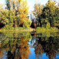 #calmness Photo by Sóstói András  #tokajwineregion #visittokaj #tokajhegyalja #autumn #colorful #lake #instahungary #instahun #turatajolo #loves_hungary #visithungary #UNESCO #unescoworldheritage #unescoworldheritagesite #discoverglobe #instaphoto #pictureoftheday #picoftheday