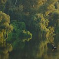 Reggel a Tiszán