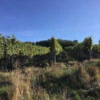 #october #morning  #tokajwineregion #tokaji #tokaj #tokajiaszu #visittokaj #tokajhegyalja #tokajiborok #wines #vineyard #whitewines #winelover #instawine #nature #naturephotography #naturelover #instahungary #instahun #turatajolo #loves_hungary #visithungary @eurotravellers #UNESCO #unescoworldheritage #unescoworldheritagesite #discoverglobe #instaphoto #pictureoftheday #picoftheday @zsoltberger  @elmenyitthon @ilovehungarianwines