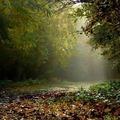#autumn Photo by Sóstói András  #tokaj #zemplen #tokajwineregion #tokaji #visittokaj #tokajhegyalja #tokajiborok #wine #whitewine #winelover #foggy #forrest #colorful #instahun #loves_hungary #visithungary #naturelovers #naturephotography #UNESCO #unescoworldheritage #unescoworldheritagesite #awesome_naturepix #discoverglobe #instaphoto #pictureoftheday #picoftheday #photo #photooftheday #photography