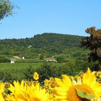 #Királyhegy Photo by Sóstói András #tokajwineregion #tokaji #tokaj #sarospatak #visittokaj #tokajhegyalja #sunflower #summertime #summmer #sunshine #nature #naturelover #naturepics #vineyard #instahungary #instahun #loves_hungary #visithungary @eurotravellers #UNESCO #unescoworldheritage #unescoworldheritagesite #discoverglobe #instaphoto #pictureoftheday #picoftheday #mindekozben @elmenyitthon @discoverglobe @szeretlekmagyarorszag.hu @winerylovers @gotohungary_official @ilovehungarianwines @instasarospatak