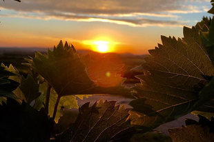 #sunset  Photo by @tamaspal_  #tokajwineregion #tokaji #tokaj #visittokaj #tokajhegyalja #tokajiborok #wines #whitewines #winelover #instawine #nature #naturephotography #naturelover #instahungary #instahun #loves_hungary #visithungary #UNESCO #unescoworldheritage #unescoworldheritagesite #discoverglobe #instaphoto #pictureoftheday #picoftheday @elmenyitthon @ilovehungarianwines @hellomagyarorszag