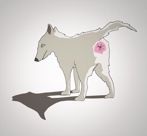 kutya1.jpg