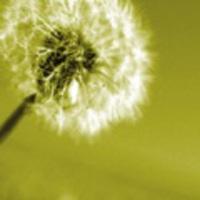Allergia, mint immundefekt