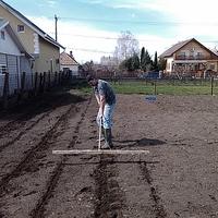 Nem kertelünk, vagyis kertelünk, közben tervelünk