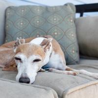 Így tölts minőségi időt a kutyáddal