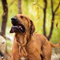 A kutyaközösség (le)építő ereje