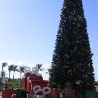 2011. december 13. Castaway Cay