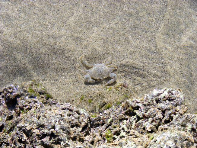 apró rákokokkal teli strand.jpg
