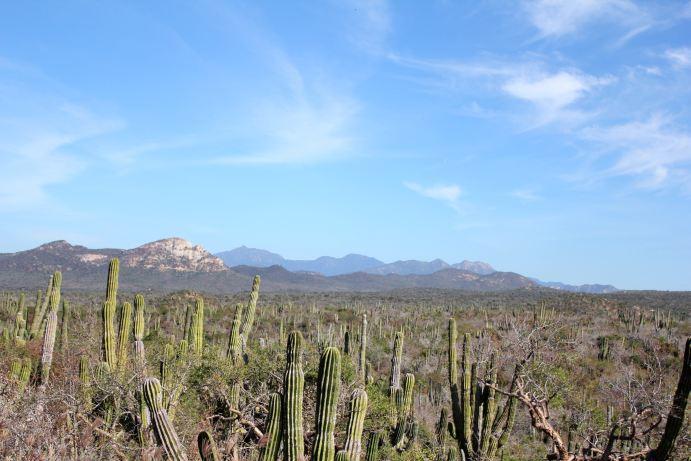 kaktuszsivatag.jpg