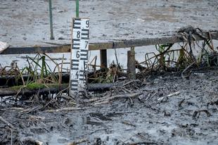 Vizes élőhelyek veszélyben – A szigetszentmiklósi olajszennyezés