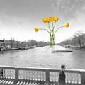 Amszterdami panoráma egy sárga tulipánból