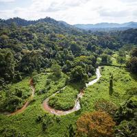 Megtalálták a Majomisten városát a hondurasi esőerdőben?