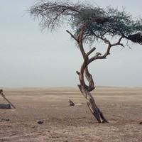 Hogyan múlt ki a világ legmagányosabb fája?