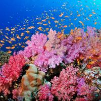 Mentünk vagy pusztítunk: mi lesz veletek korallok?