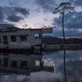 A fa, amely túlélte a cunamit