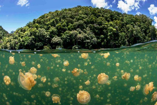 meduza-to_1.jpg