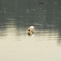 Szemetelés, vízszennyezés - egy horgász gondolatai 3. rész