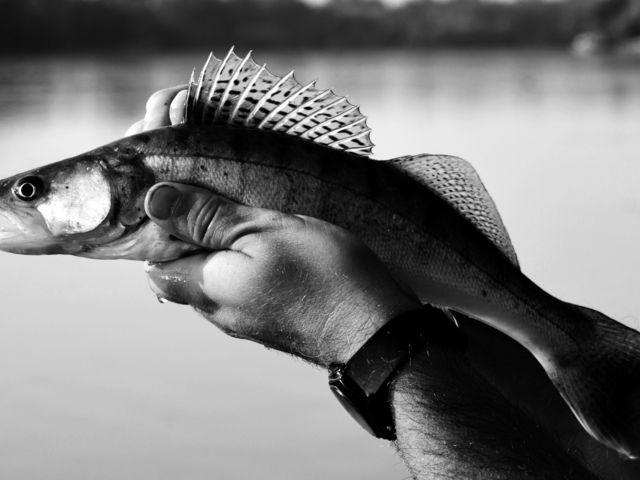 Vigyázat! Kezdő pergető horgász! 2. rész