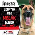 Szépítsd meg egy állat életét az inecto segítségével!
