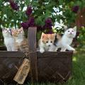 Íme néhány remek Macskabölcsesség tiniknek
