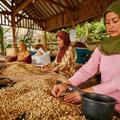 Művészi kávé- és pezsgőkészítési eljárások Szumátráról és Somlóról