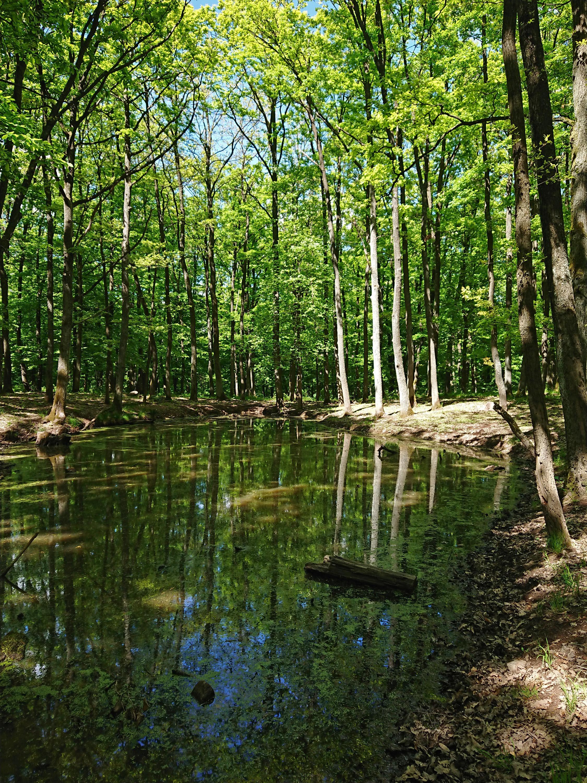 Apró kis tó a Börzsöny mélyén<br />