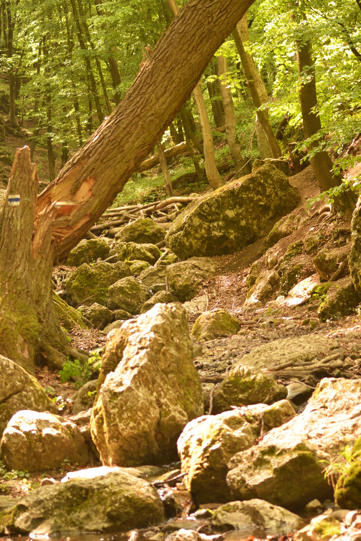 Behajló, bedőlt fák, sziklák és kövek teszik vadregényessé az útvonalat
