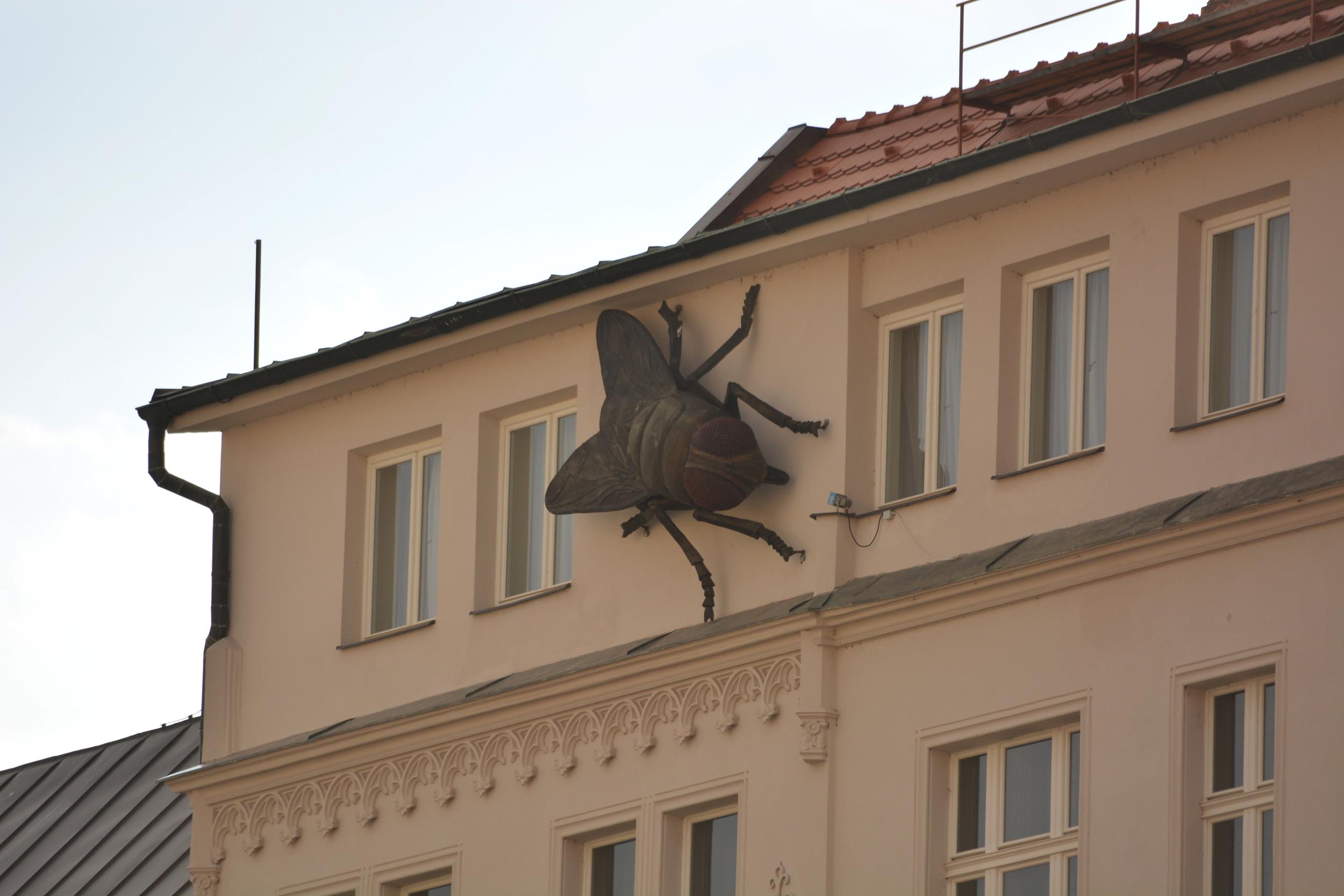 légy a falon - ez is Nové Mesto