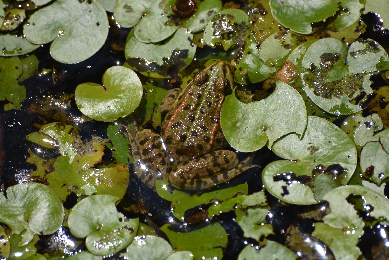 A Tisza-tó növény- és állatvilága - ez figyelhető meg a tanösvényeken
