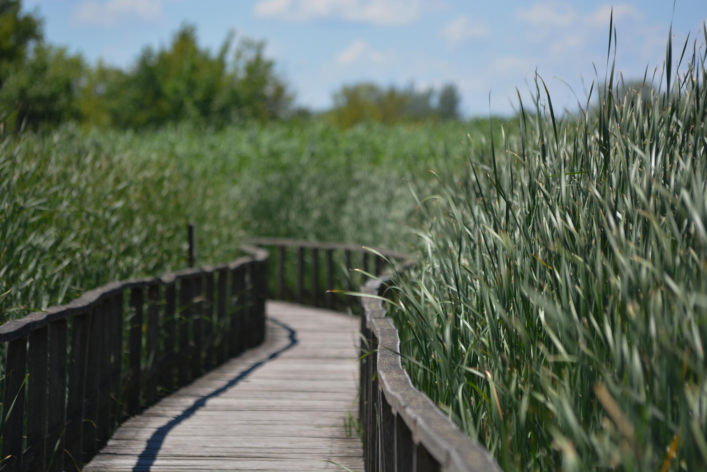 Tisza-tavi Vízi Sétány - út a nádasba