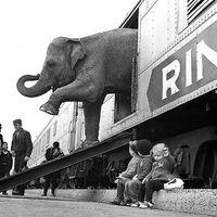 Vendégposzt - További vonatos filmek
