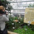 Trópusi pillangók a Müncheni Botanikus kertben