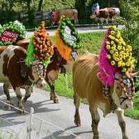Almabtrieb Söllben - egy érdekes népszokás Tirolból