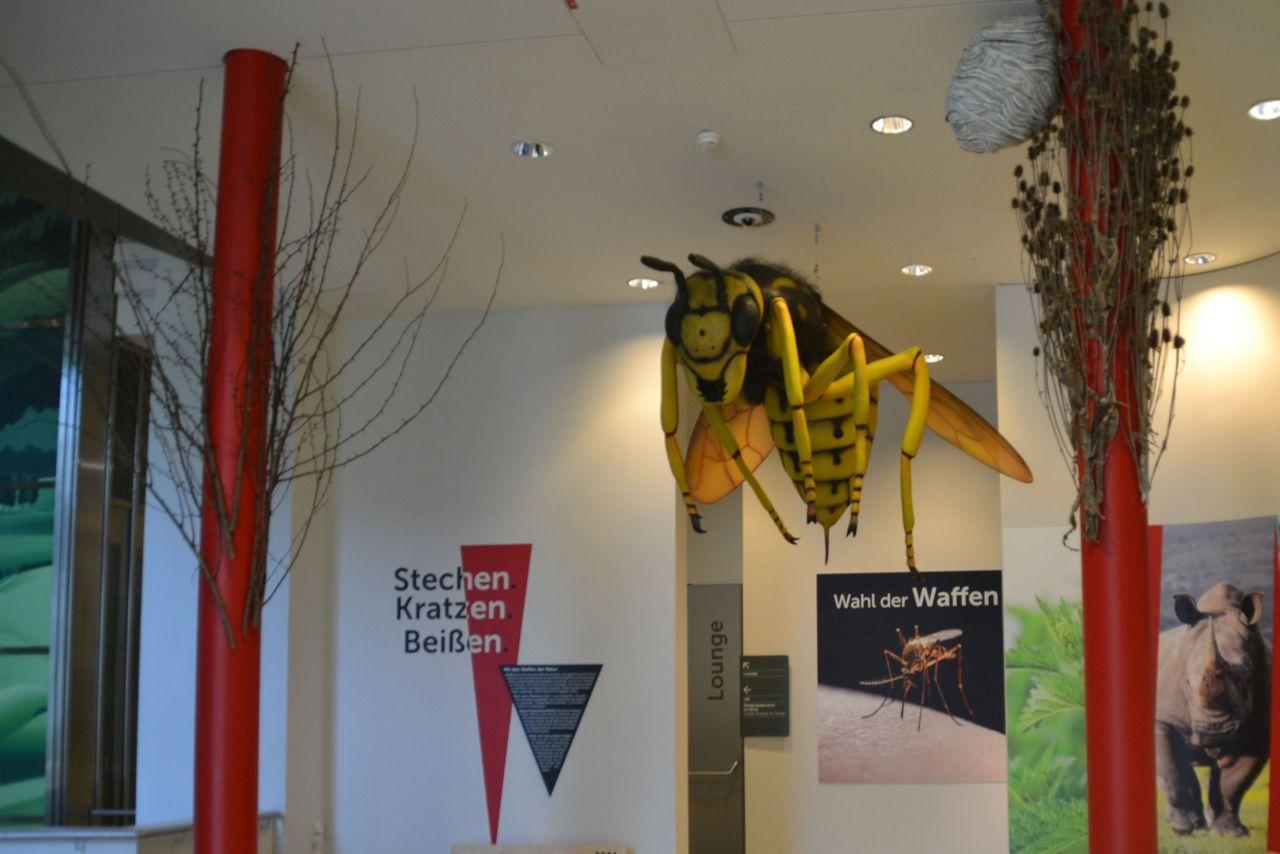 st. pölten, ausztria, természettudományi múzeum, lódarás