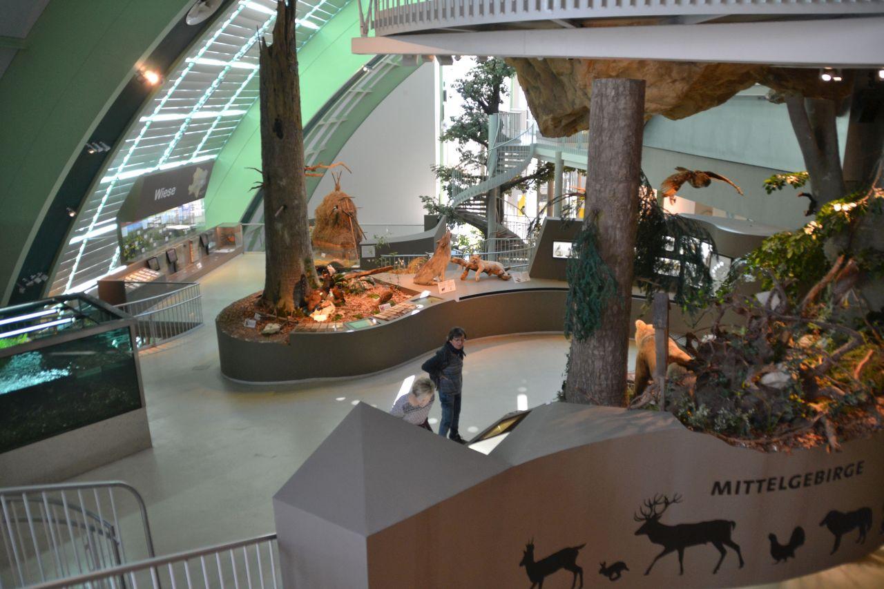 st. pölten, ausztria, természettudományi múzeum