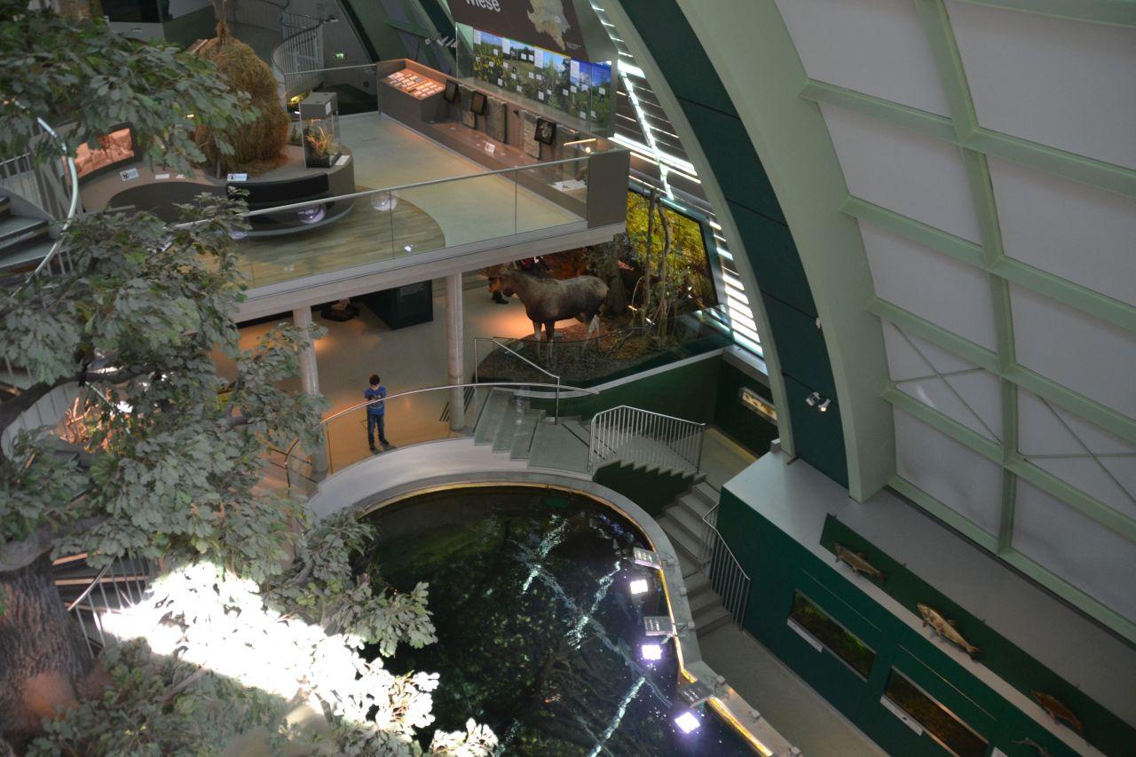 st. pölten, ausztria, természettudományi múzeum, halak