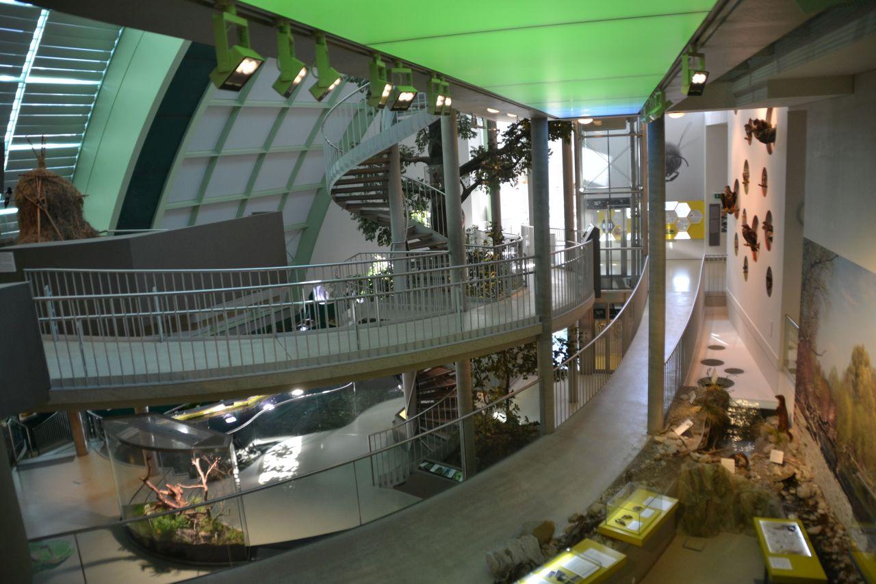 st. pölten, ausztria, természettudományi múzeum,
