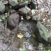 Börzsöny: Oltár-kő