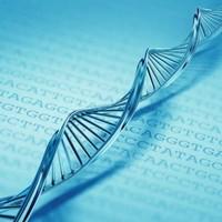 16. A DNS-be gépelhető könyv