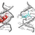 Számítógéppel tervezett molekulával a HIV ellen