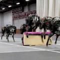 Helyzetjelentés a robotok világából