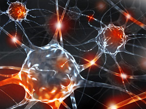 Researchers-Reprogram-Other-Cells-to-Become-Nerve-Cells-Directly-in-the-Brain.jpg