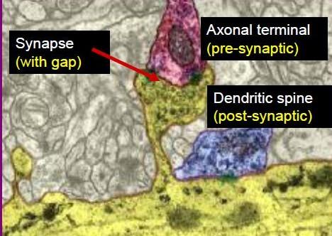 synapse-photo_1.jpg