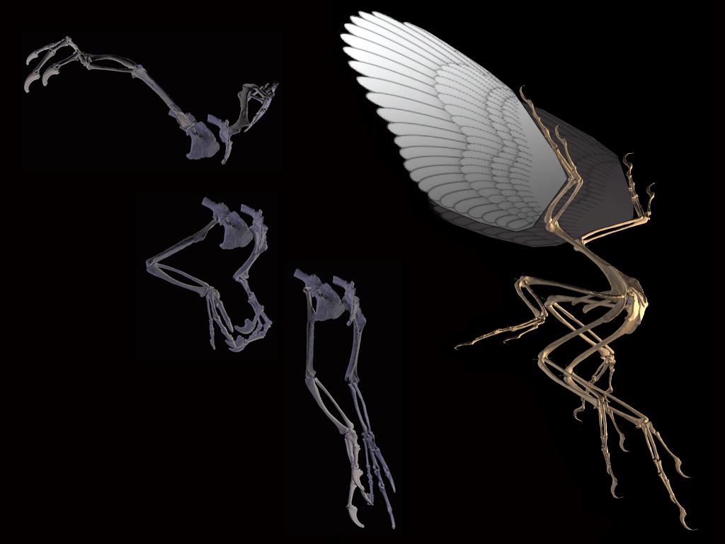 17-paleontologi.jpg